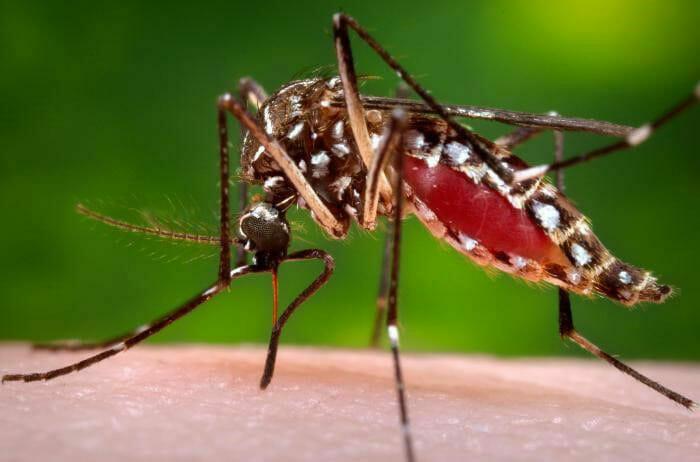 The Frightening Dengue